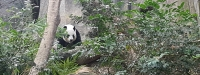 Panda River Safari SG